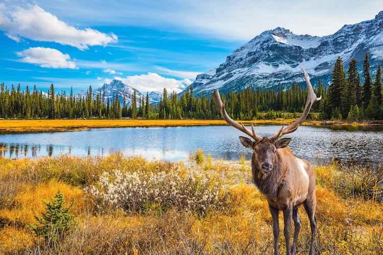 Autumn Colours of Canada