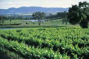Vineyard, Mudgee