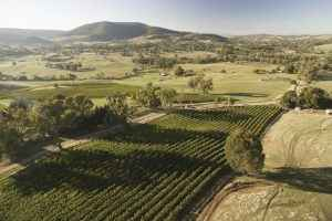 Vineyards, Tumbarumba