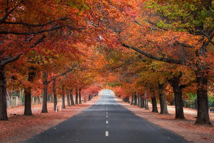 Autumn Colours Aircruise