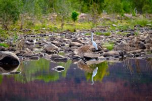El Questro - birdlife found at Explosion Gorge - Luxury Private Kimberley Air Tour
