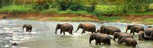 Sri Lanka - Elephants - Bill Peach Journeys