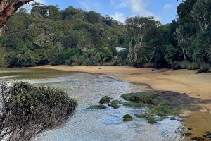 Stewart Island - secluded sandy beaches - Luxury solo tours