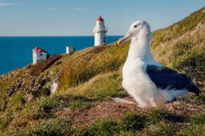 Dunedin - Royal Albatross Centre - Luxury short breaks South Island