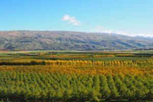 Teviot Valley - plentiful valley lowlands Central Otago - Luxury solo tours