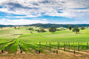 Adelaide Hills - home to some of the world's oldest grape vines - luxury short breaks South Australia