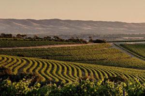McLaren Vale - the birth place of South Australian wine - luxury short breaks South Australia