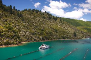 Marlborough - cruise exploring the seafood and sounds - Luxury short breaks New Zealand
