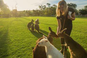 Port Lincoln - feeding the kangaroos at Glen Forest Tourist Park - luxury short breaks South Australia