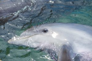 Whyalla - dolphin playing in the waters - luxury short breaks South Australia