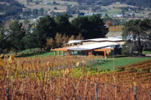 Ranelagh, Tasmania - Home Hill Winery vines in Autumn - Luxury Short Breaks Australia