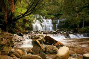 Liffey Falls - wet eucalypt and fern forest - luxury short breaks Tasmania