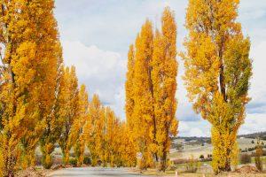 Oberon - Autumn drive to Mayfield Gardens - luxury short breaks Australia