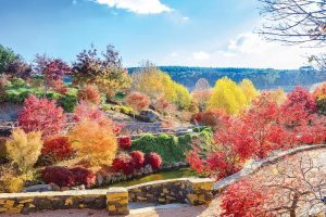 Blue Mountains - autumnal colours of Mayfield Gardens - luxury short breaks Australaia