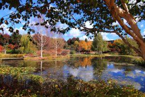 Sydney - Mayfield Gardens Lake - luxury short breaks Australia