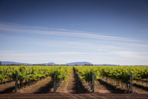 Griffith - Wineries - Bill Peach Journeys