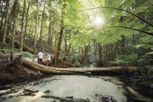 Fraser Island - Central Station bushwalk - Luxury solo tours