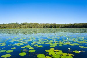 Noosa - lilypads on the everglades - Luxury short breaks Australia