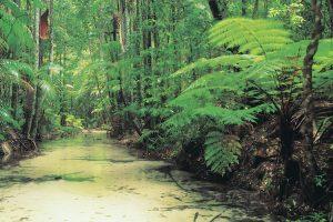 Fraser Island - Wanggoolba Creek and fern forest - Luxury short breaks Queensland