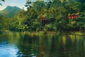Silky Oaks Lodge - located in the Daintree Rainforest - Luxury solo tours