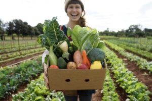 Kingscliff - organic produce grown for Farm & Co - Luxury solo tours