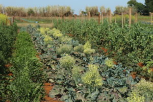 Kingscliff - organic paddock to plate farming, Farm & Co - Luxury solo tours