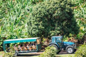 Kingscliff - tour around Tropical Fruit World - Luxury solo tours