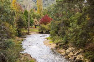 Bright - flowing river and autumn trees - Luxury solo tours