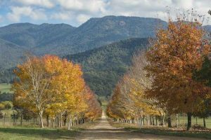 Buckland Valley - autumn tree lined streets - Luxury short breaks Victoria