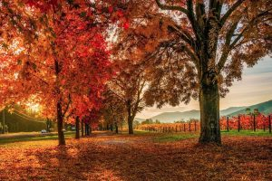 Bright - streets lined with autumn trees - Luxury solo tours