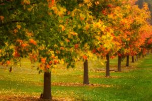 Bright - leaves turning from green to orange to red - Luxury short breaks Australia