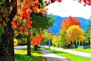 Harrietville - streets lined with the many colours of autumn - Luxury short breaks Australia