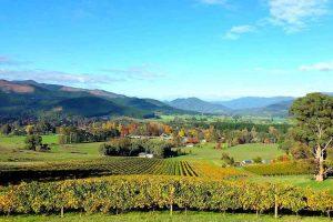 Myrtleford - Ringer Reef handmade Alpine Valley winery - Luxury solo tours