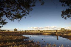 Rutherglen - fields in the country - Luxury short breaks Victoria