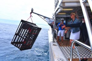 Perth - catching lobsters for fresh seafood lunch on board cruise - Luxury short breaks Western Australia