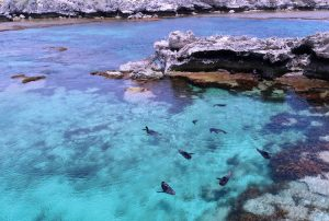 Rottnest Island - seals playing in the secluded cove - Luxury solo tours