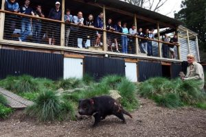 Cradle Mountain - learning about Tasmanian Devils - Luxury short breaks Australia