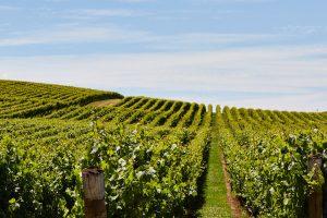 Pipers Brook - Vineyard located in the Tamar Valley - luxury short breaks Tasmania
