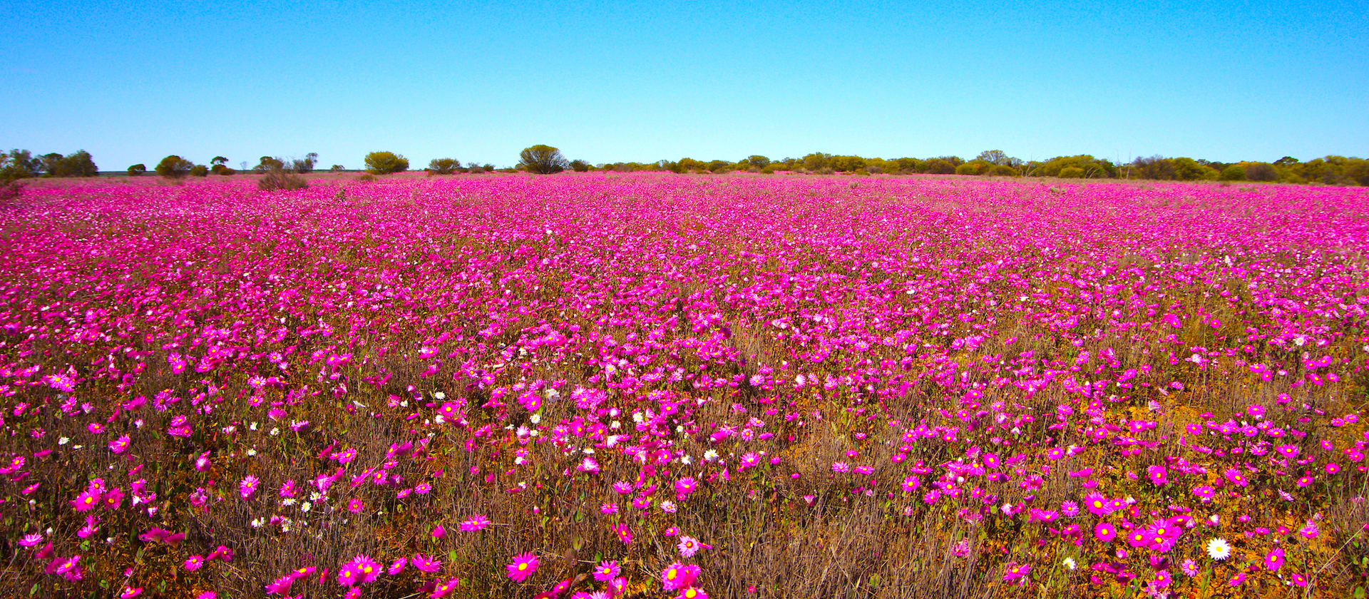 Wildflowers of Perth & Margaret River